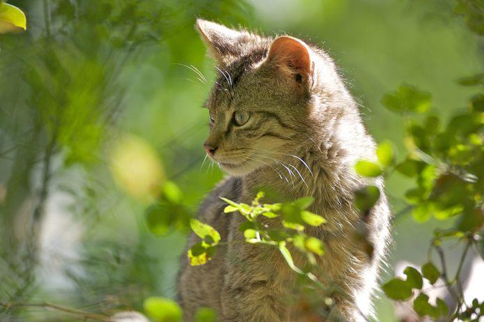 Een jonge wilde kat