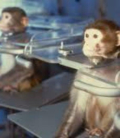 Elon Musk stopt chip van computergame in hersenen van levend aapje