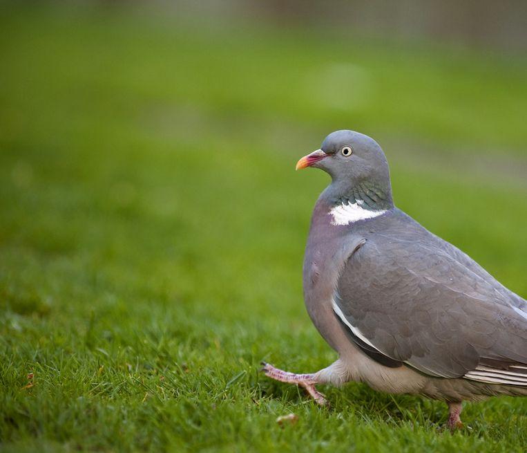 Zondag is er een vogelspotdag in het Amstelpark. Beeld ANP