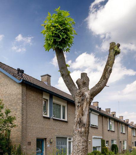 Digitale kaart geeft aan waarom boom tegen vlakte gaat: 'Bomen zijn emotie'