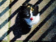Verdachte van kattenmarteling ontkent, maar justitie gelooft hem niet: 'Toeval dat ik daar was'