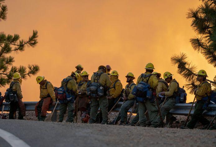 Brandweerlieden bestrijden de bosbrand.