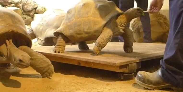schildpadden.png
