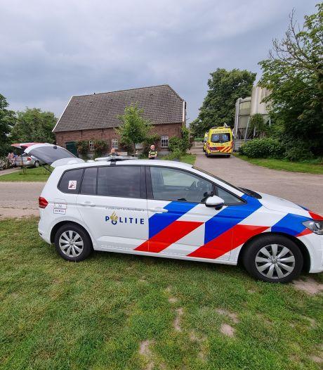 Koe slingert vrouw over hek in De Heurne: slachtoffer gewond naar ziekenhuis