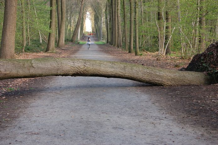 Het Sterrebos in Roeselare