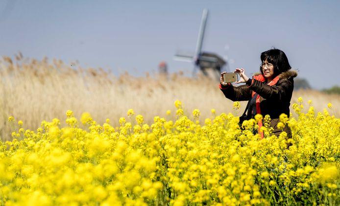 Een toerist maakt met haar telefoon een selfie in het wereldberoemde molengebied van Kinderdijk.