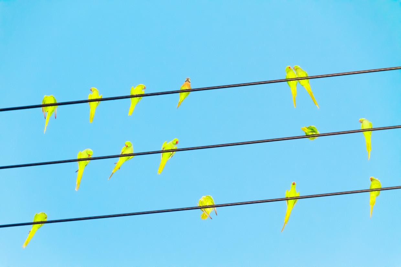 Beeld uit de serie Tokyo Parrots (2013) van deJapanse fotograaf Yoshinori Mizutani. Beeld Yoshinori Mizutani
