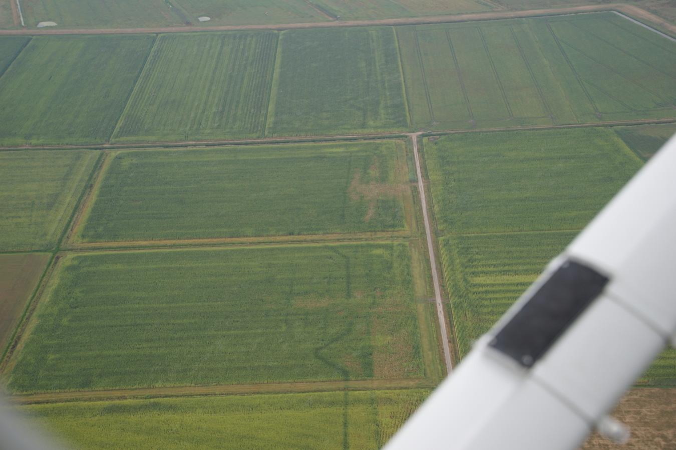 Door de droogte is de Linie 1629 weer zichtbaar in het Gement