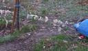 Les chiens se seraient glissé sous la clôture qui sépare le terrain du voisin au jardin de Viviane.