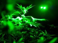 Légaliser le cannabis récréatif, la proposition choc des économistes français