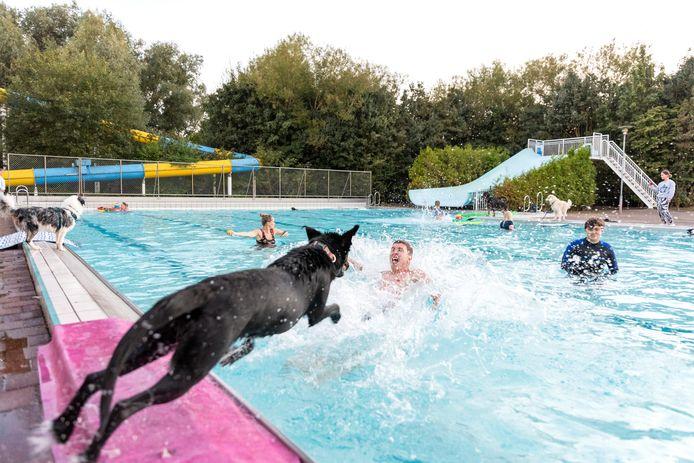 Honden nemen duikje in zwembad De Stok in Roosendaal.