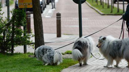 Schaft Overijse als één van laatste Vlaamse gemeenten hondentaks af?