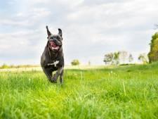 Agent schoot hond in 's-Heerenberg neer 'uit zelfverdediging', bazin laat het er niet bij zitten