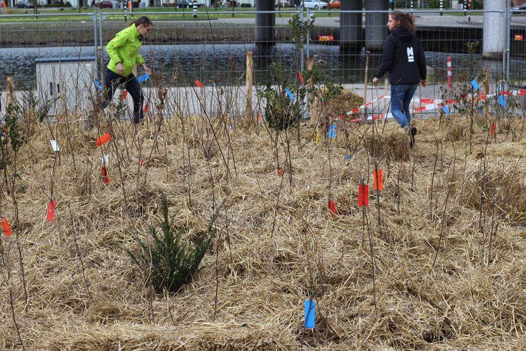 De bomen voor het minibos in de Utrechtse wijk Terwijde werden deze week geplant Beeld Fabrice Ottburg
