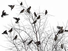 La Justice européenne recale la chasse d'oiseaux à la glu