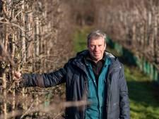 Fruitteler Herman Florissen vergelijkt geen appels met peren