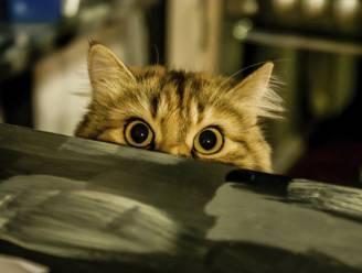 Tien tekenen dat je kat je wil vermoorden