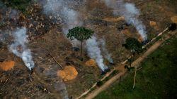 """Ontbossing in Amazonegebied verdubbeld: """"Illegale houtkappers werken niet van thuis uit"""""""