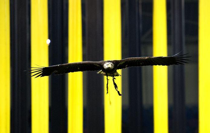 Arend Hertog, de vliegende mascotte van Vitesse.