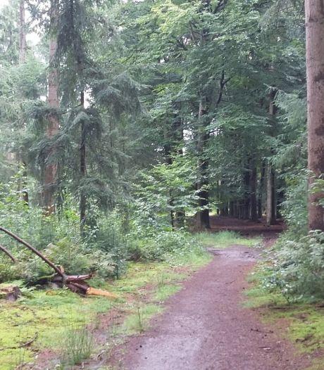 Natuurbegraven straks mogelijk in bos bij Soest