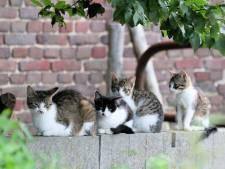 Verschrikkelijke ontdekkingen in Ede: twee zakken vol met dode kittens