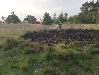 Opnieuw brand op Kalmthoutse Heide, maar gelukkig 'in de kiem' gesmoord