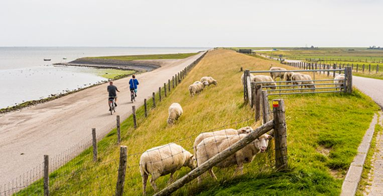Texel is a municipality and an island in the province of North Holland in the Netherlands. It is the largest and most populated island of the West Frisian Islands in the Wadden Sea. The island is situated north of Den Helder. Beeld Getty Images