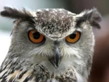 Vogelopvang bedreigd om vangen terror-oehoe
