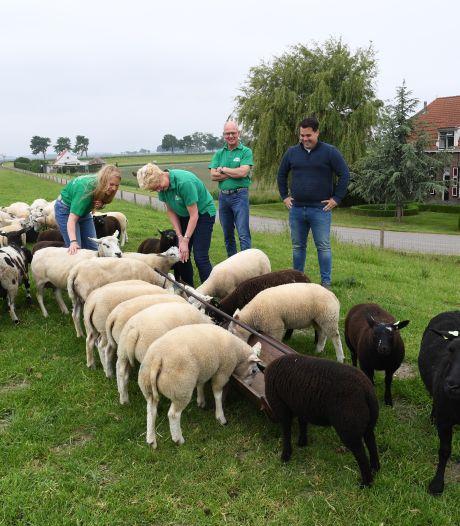 Op deze boerderij zorgen 52 wandelende maaiers ervoor dat het gras er netjes bijstaat