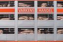 Protest tegen varkenshandel en slachterijen met reden van dierenmishandeling en mogelijke oorzaak van corona.