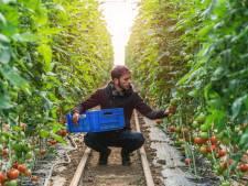 Tinte heeft slapeloze nachten van woonpark voor 160 arbeidsmigranten