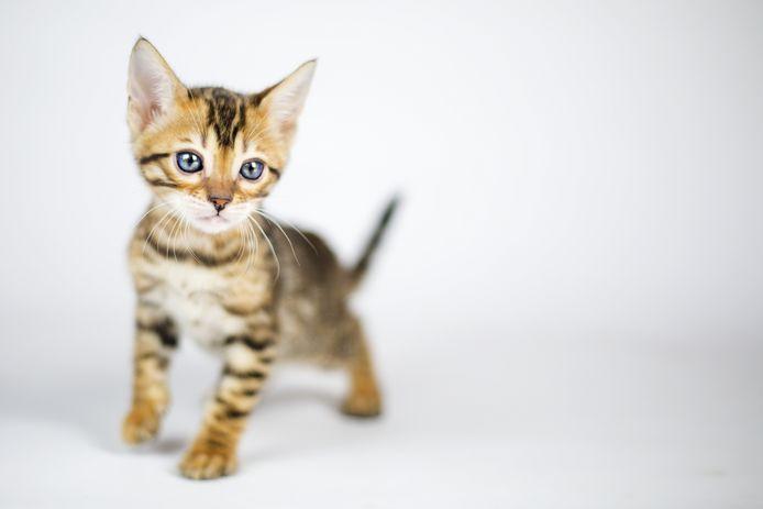 Foto ter illustratie. Niet de kitten uit het verhaal.