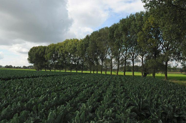 Langs de Boelakendreef komt tien hectare natuur.