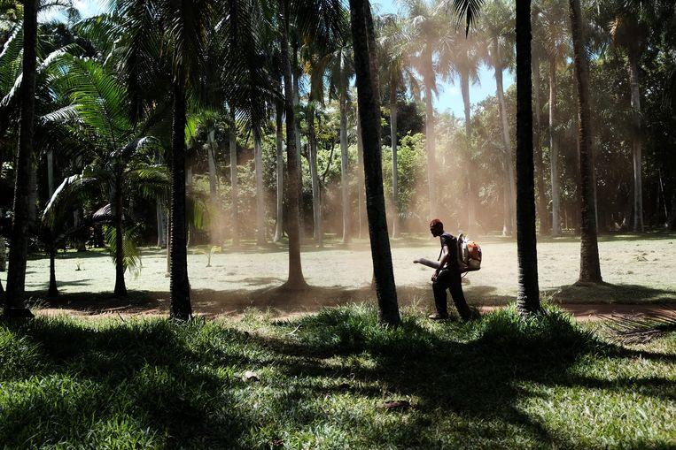 De botanische tuin van Pamplemousses: de oudste van het zuidelijk halfrond.  Beeld jesse brouns