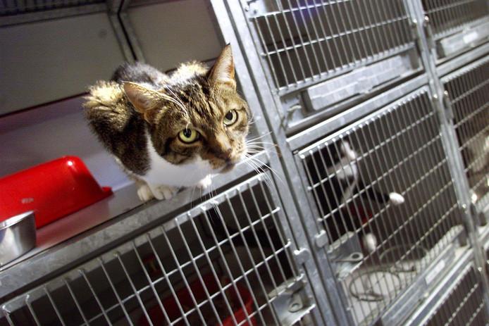 Een kat in een asiel. Foto ter illustratie.