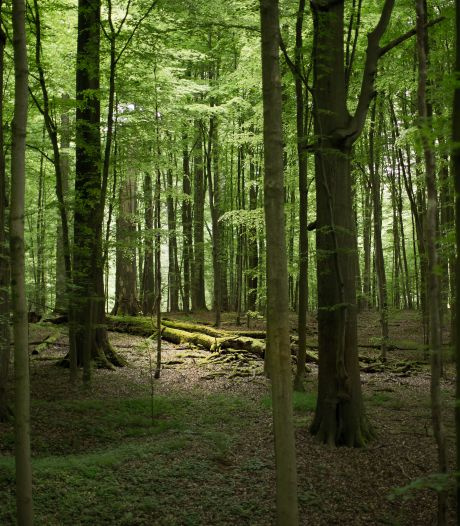 L'effet isolant des forêts mis en lumière par une étude universitaire belge