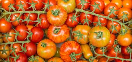 Betere tomaten tegen lagere kosten, de zelfsturende kas maakt het mogelijk
