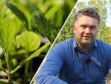 Dit verwoeste bos wordt eetbaar: 'Zowel voor ons als de bijen'