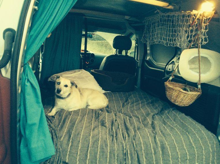 Hondje Sjlabie, volledig zen in de tot mobilhome omgebouwde Peugeot Partner. Beeld Hilde Van Mieghem