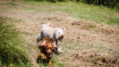 In deze eerste Oudenburgse hondenloopweide kunnen ze volop de pootjes strekken