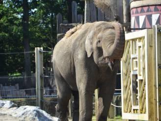 """Laatste olifant verlaat Bellewaerde: """"We willen meer kweken met bedreigde Rothschildgiraffen"""""""
