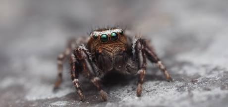 De beheerder van deze Facebookgroep over spinnen was er eerst bang van
