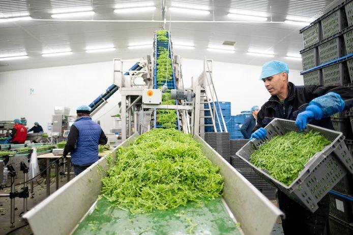 Het bedrijf Brovo opent de deuren tijdens de Week van de Groentestreek