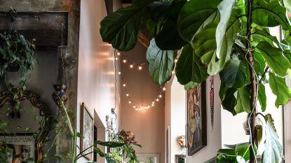 We willen allemaal een 'groen' interieur, de plantendokter vertelt je hoe dat kan