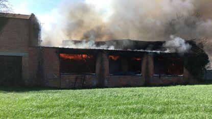 Felle brand in loods in Wilsele volledig onder controle, oorzaak nog onduidelijk