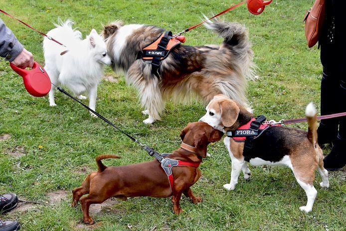 Kuurne krijgt binnenkort ook een gebied waar honden vrij kunnen rondlopen.