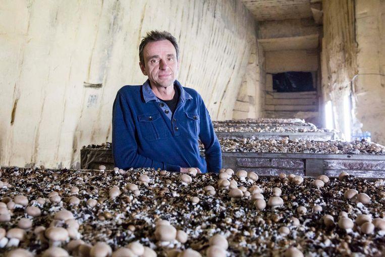 Dirk Jackers bij zijn champignons in de mergelgrotten in Kanne.