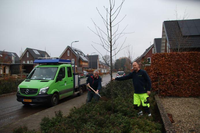 De Rhedense wethouder Marc Budel (CDA) plant de eerste van 180 bomen die dit najaar in zijn gemeente de grond in gaan.
