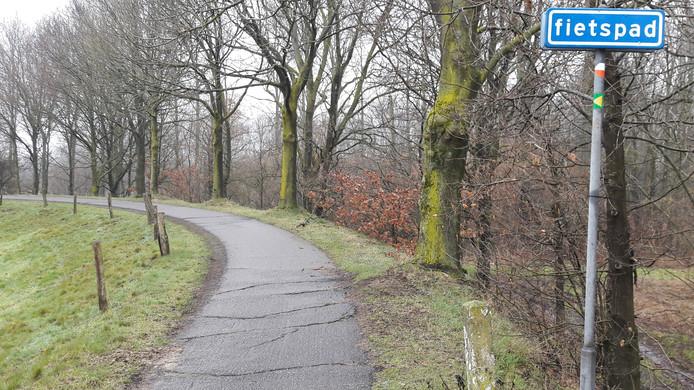 De vier essen rechts op de Elshoutse Zeedijk moeten, samen met enkele andere bomen weg. Daarna kunnen de scheuren en hobbels in het wegdek gerepareerd worden.