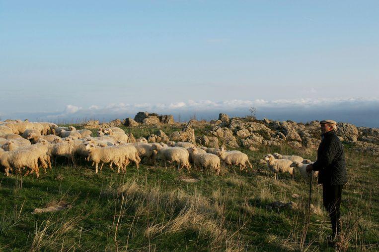 Op Sardinië zijn er opvallend veel schaapsherders die meer dan 100 jaar worden. 'Wandelen is wellicht de beste fysieke activiteit die er bestaat. Die herders lopen geen marathons hè, laat staan dat ze met gewichten zeulen.' Beeld DAVID MCLAIN